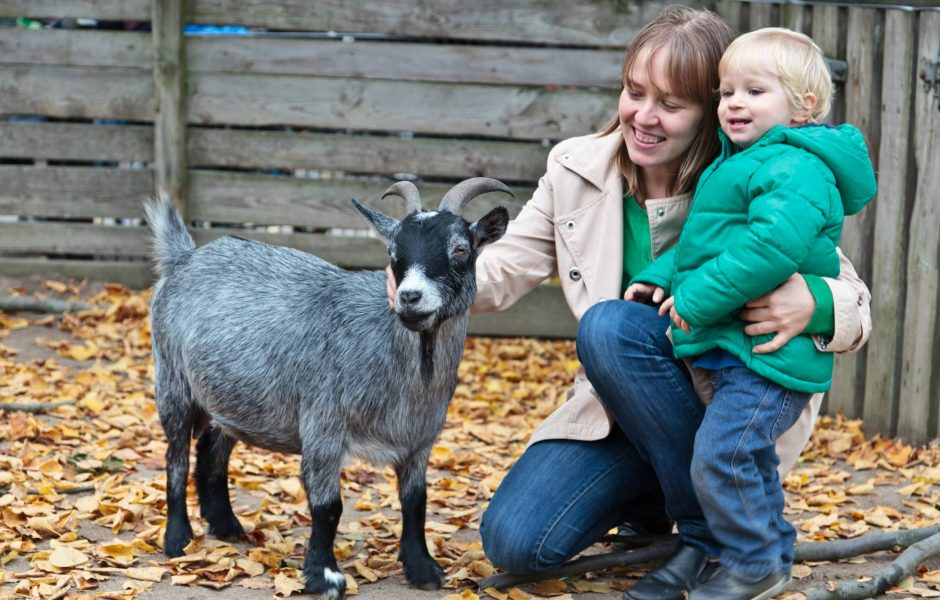 mum and her son goat petting zoo farm
