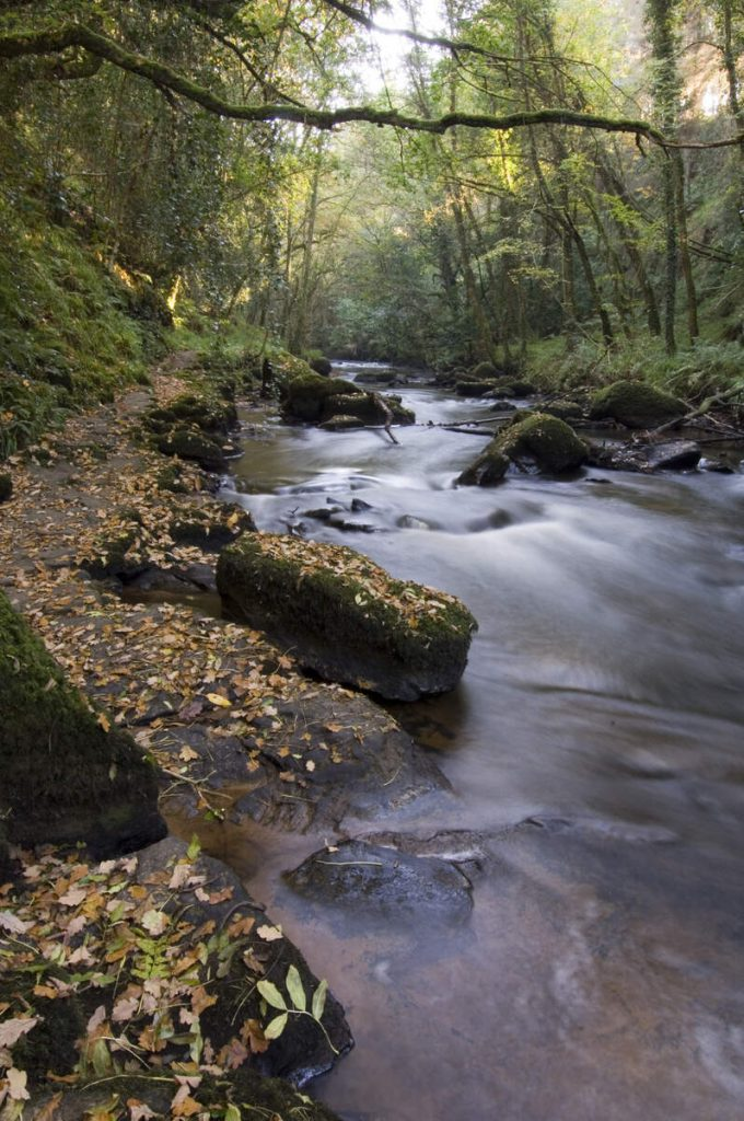 Things to do in Ballyhoura Country - Clare Glens Loop Walk
