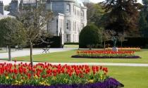 Tulips-Flowers-Powerscourt-Wicklow-Leoparstown-Clayton
